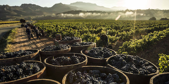 rioja harvest report 2019